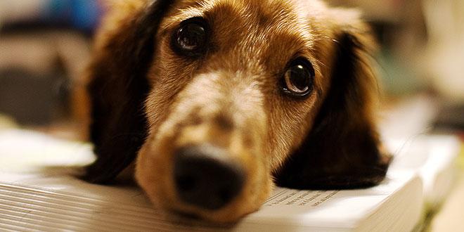 filariosi canina