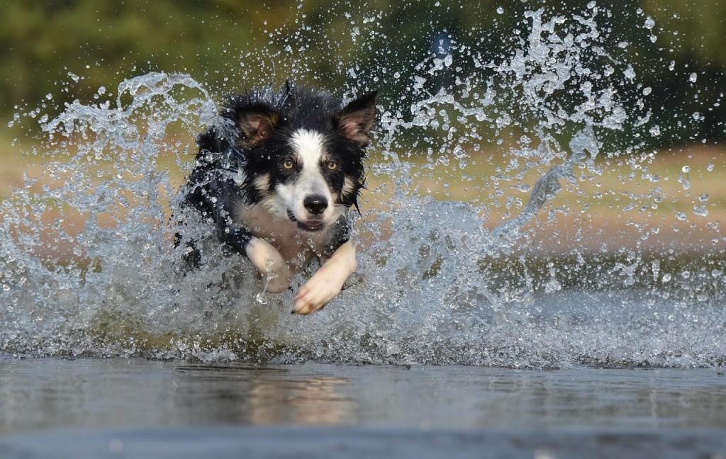 lussazione della rotula nel cane