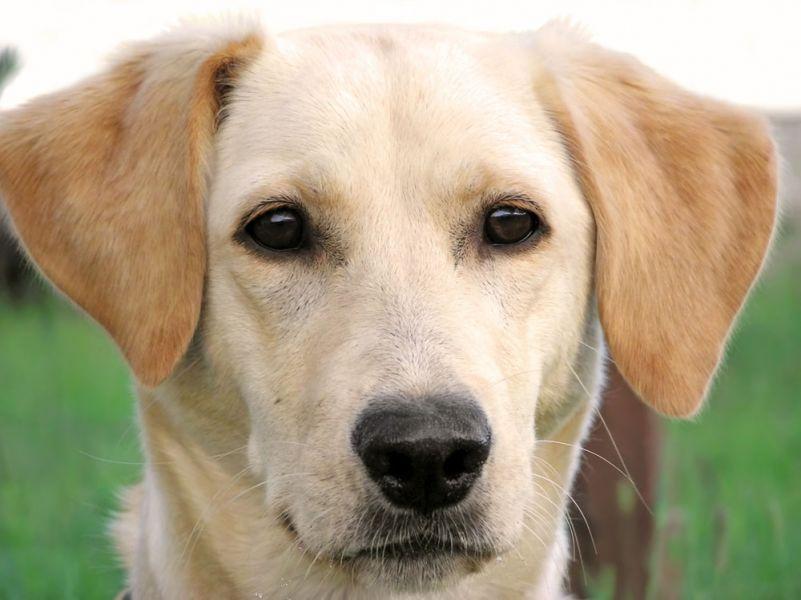 sterilizzazione cane femmina