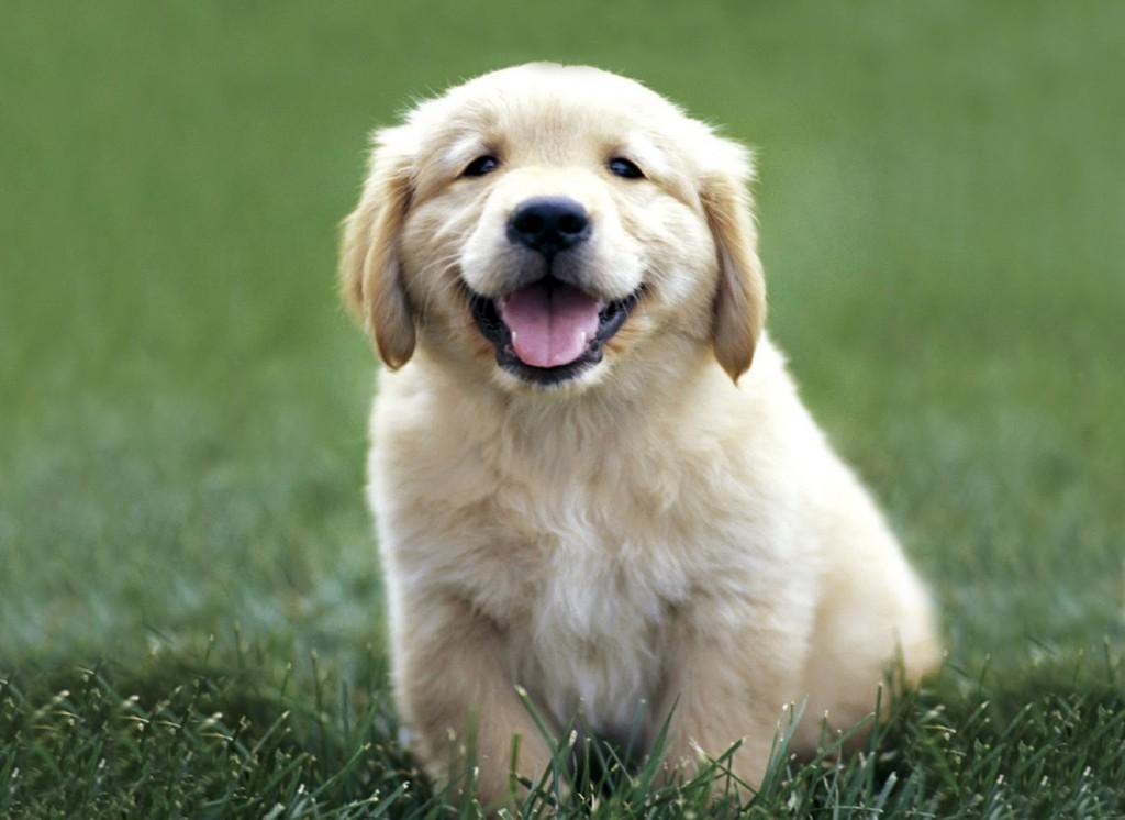 allergia inalatoria cane e gatto