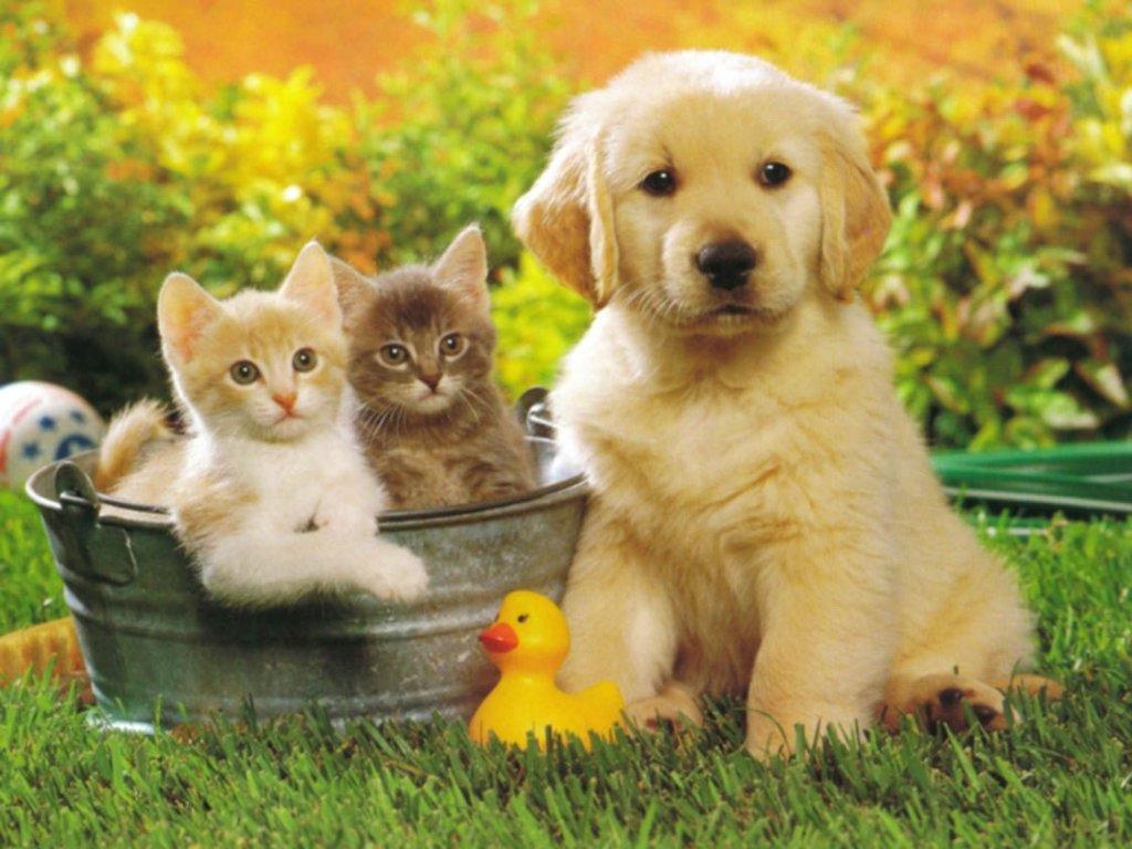 educazione del cucciolo di cane