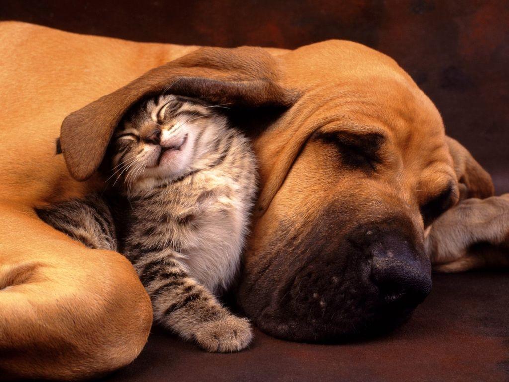 cane-gatto11