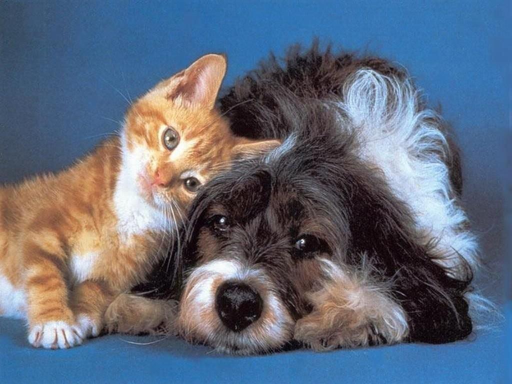 cerume orecchie cane e gatto