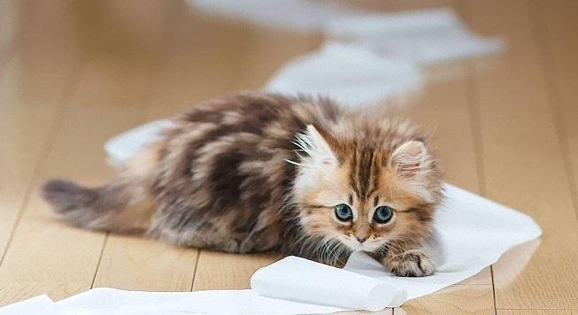 lipidosi epatica gatto