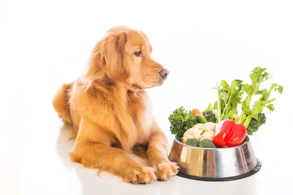 Alimentazione casalinga per cani