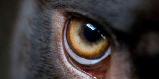 oculopatie cane