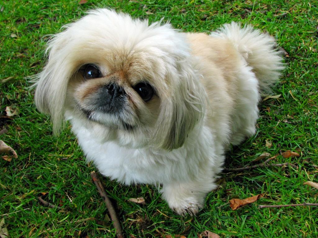 ernia del disco cani