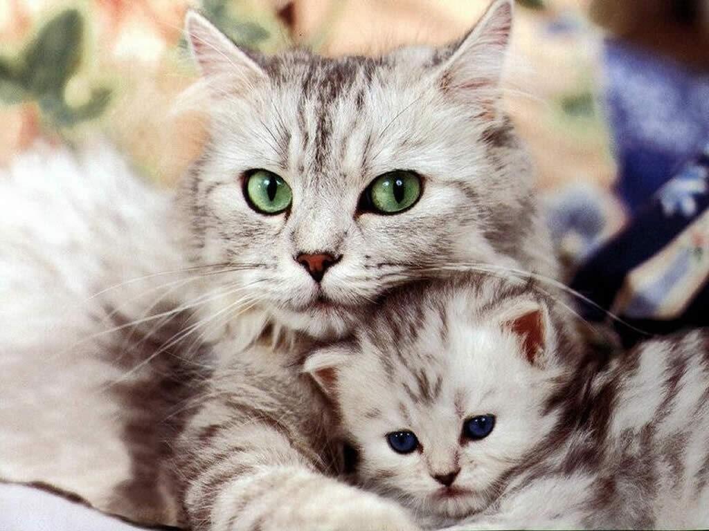 Gattino nuovo - casa del cane e del gatto