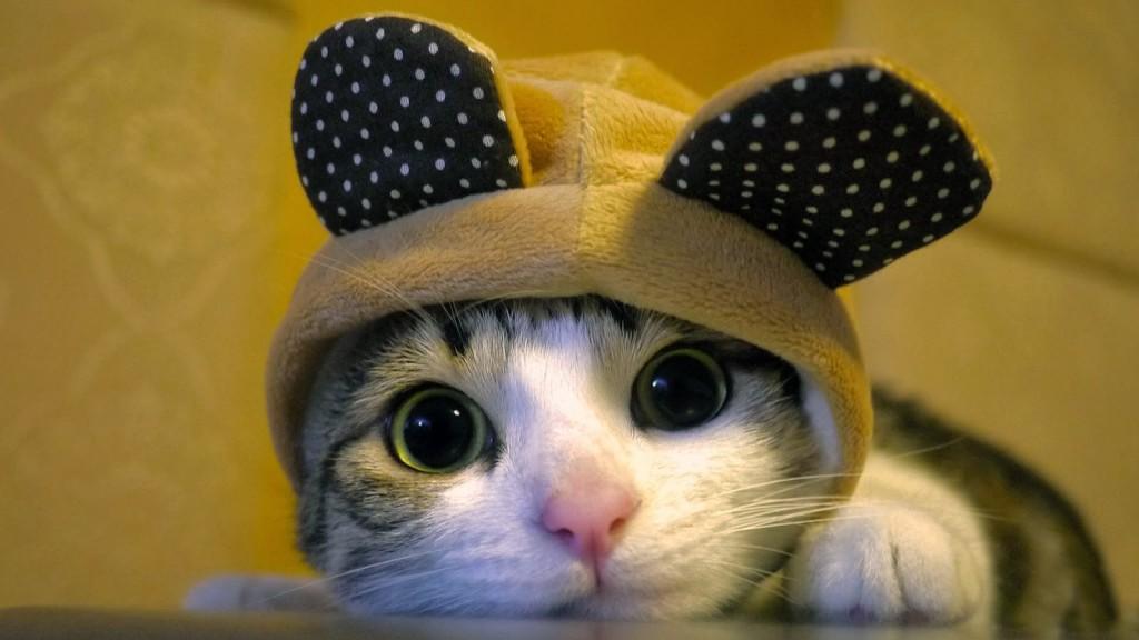 Gattino nuovo in casa- casa del cane e del gatto