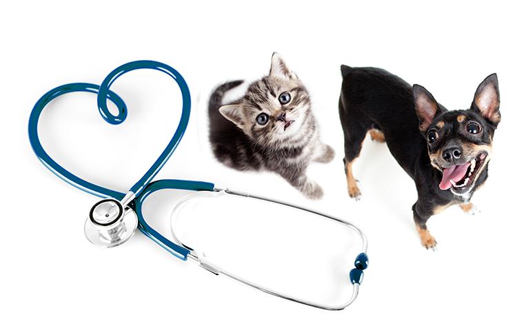 veterinario rimini