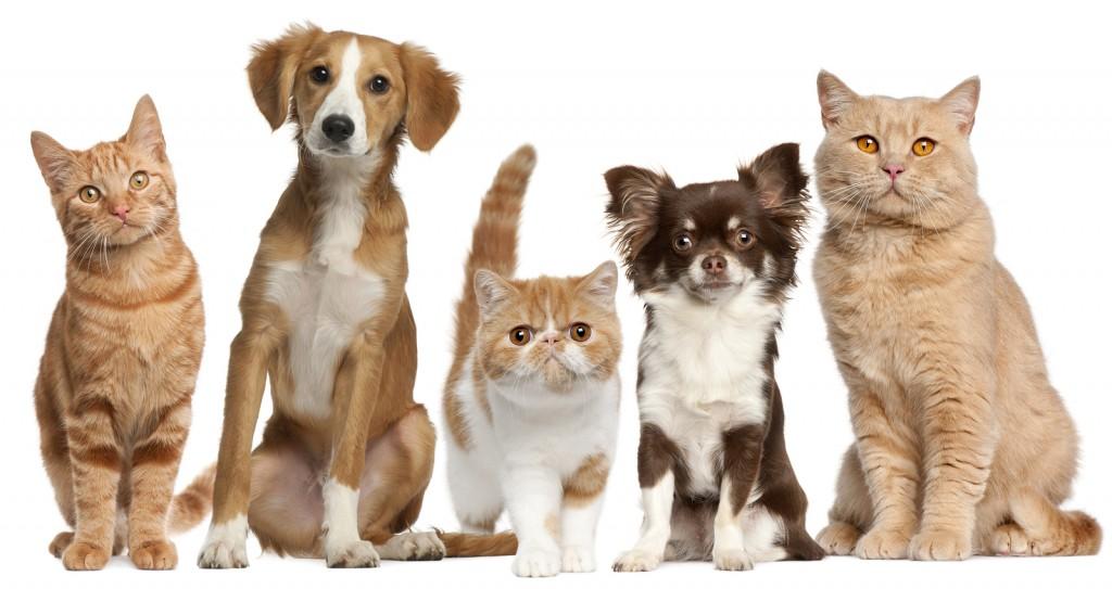 veterinario cane gatto