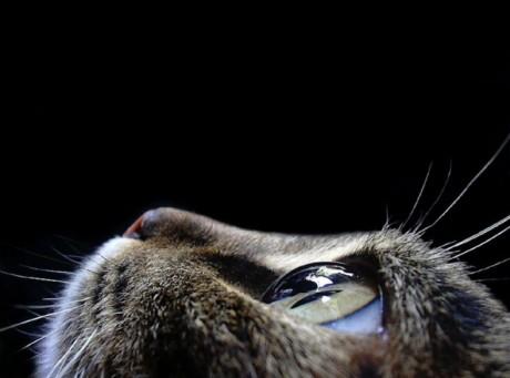 Cataratta-gatto