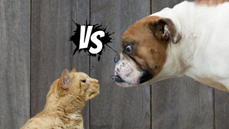 Cat-vs-Dog-e1516186098249