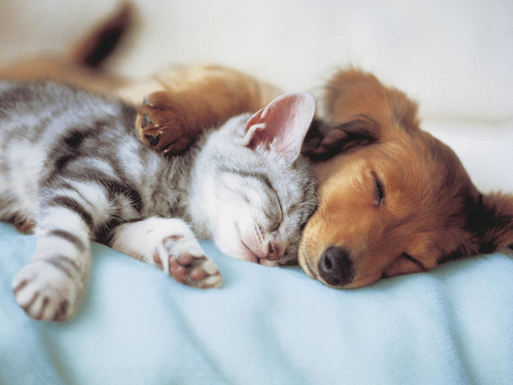 sonno-cane-gatto