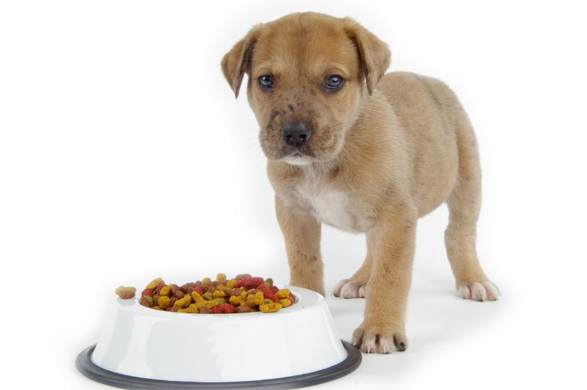 dieta casalinga cani