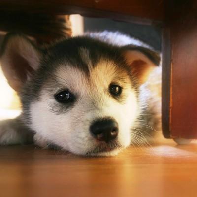 cucciolo-cane-cagnolino-relax