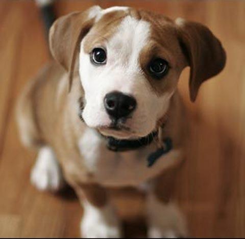 il cane mi capisce quando parlo?