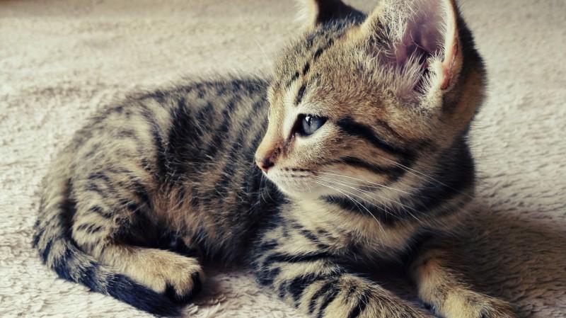 come educare gatto